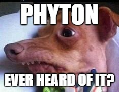 15435-phyton-jpg